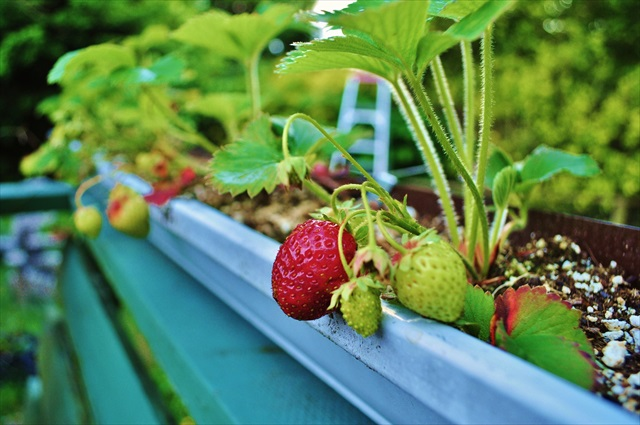 Creating your own edible small space garden | Food Bloggers of Canada