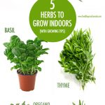 5 Herbs You Can Grow Indoors In Winter | Food Bloggers of Canada