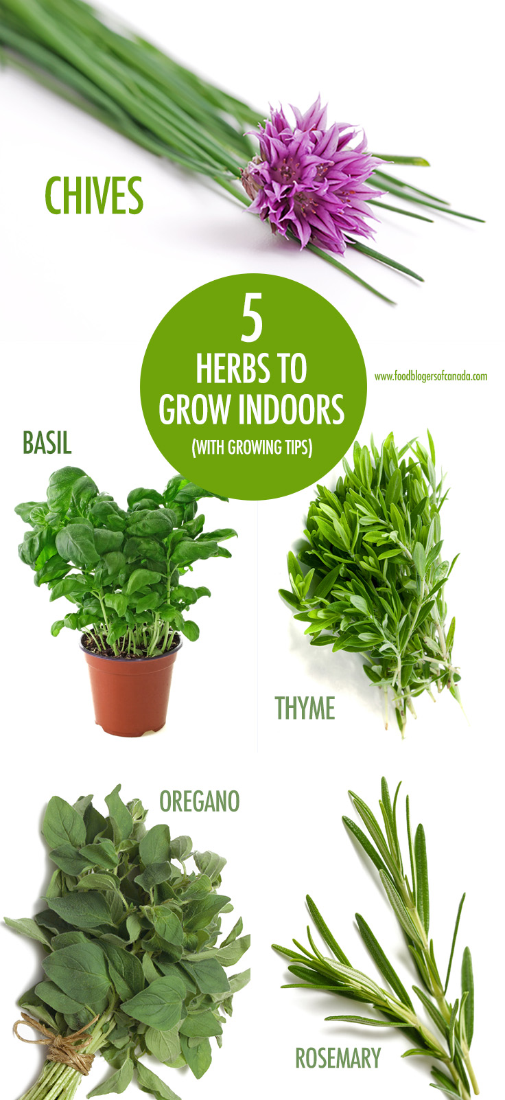 Food bloggers of canada our top five herbs to grow indoors - Best herbs to grow indoors ...