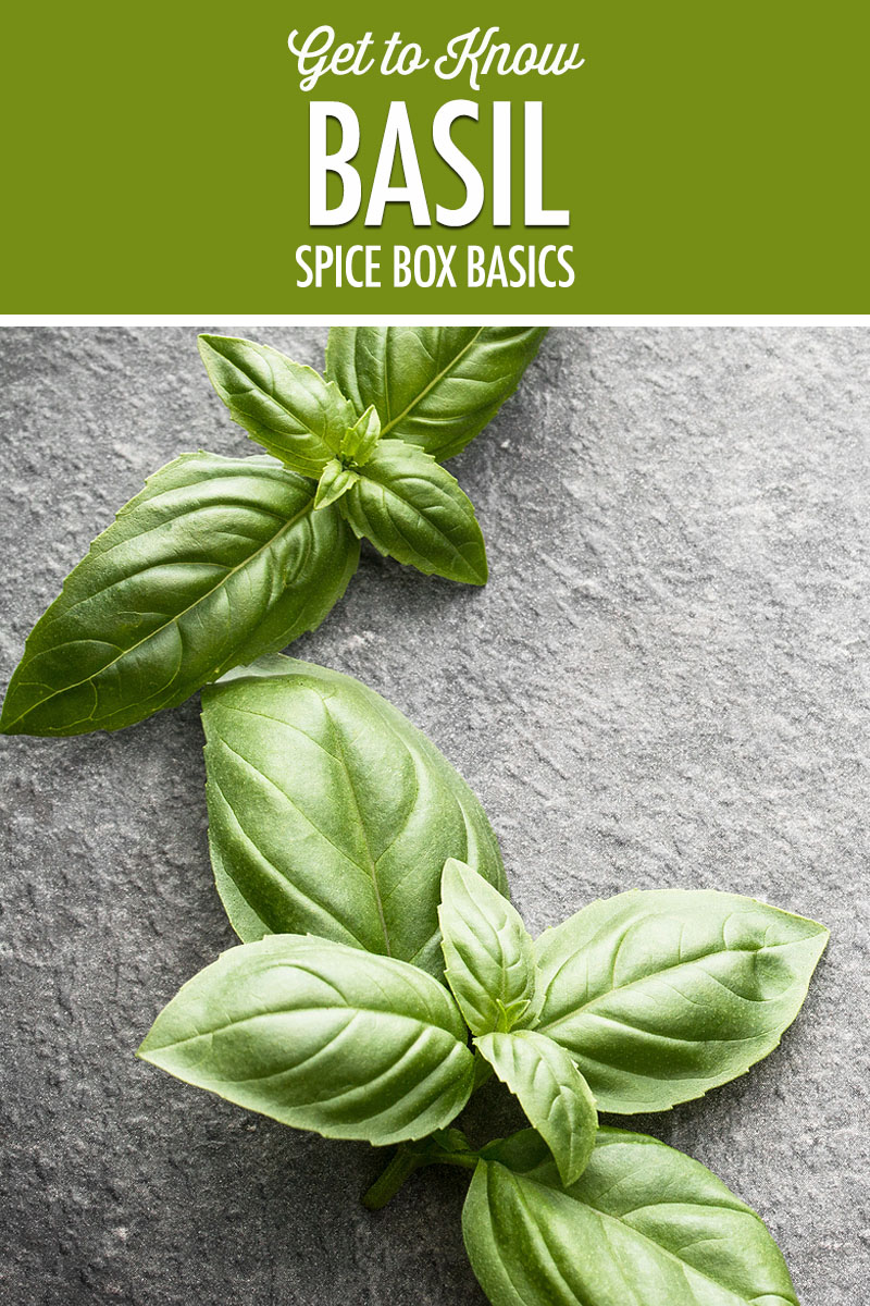 Spice Box Basics: Basil