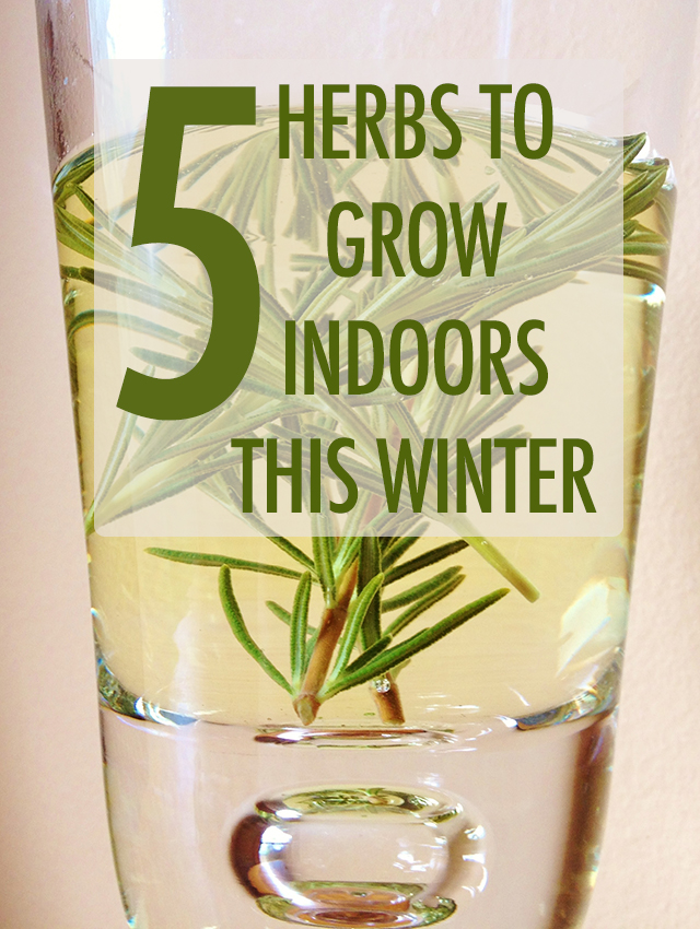 5 Herbs to Grow Indoors This Winter | Food Bloggers of Canada