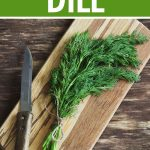 Spice Box Basics: Dill