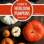 A Guide To Heirloom Pumpkins