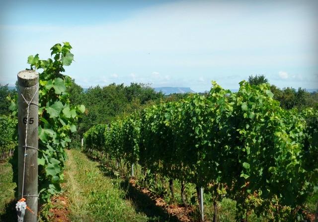 Canadian Wine: Lightfoot & Wolfville Vineyards