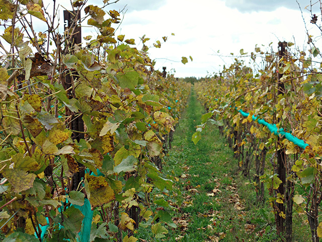Canadian Wine: Niagara's Pearl Morissette Wines