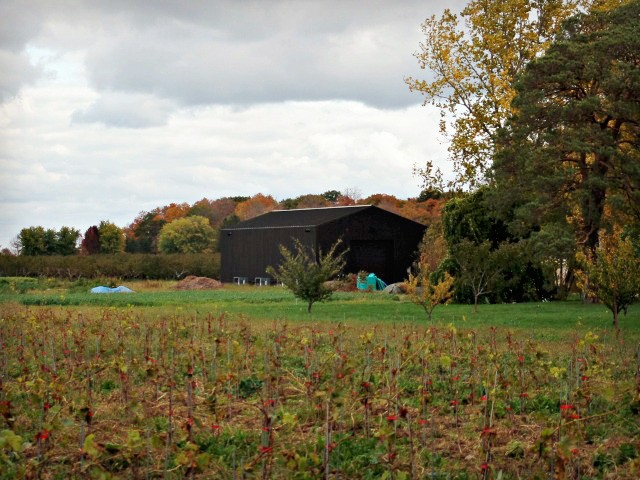Canadian Wine: Niagara's Pearl Morissette Wines