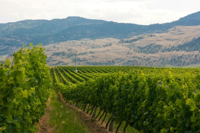 Canadian Wine: Tinhorn Creek Wineries | Food Bloggers of Canada