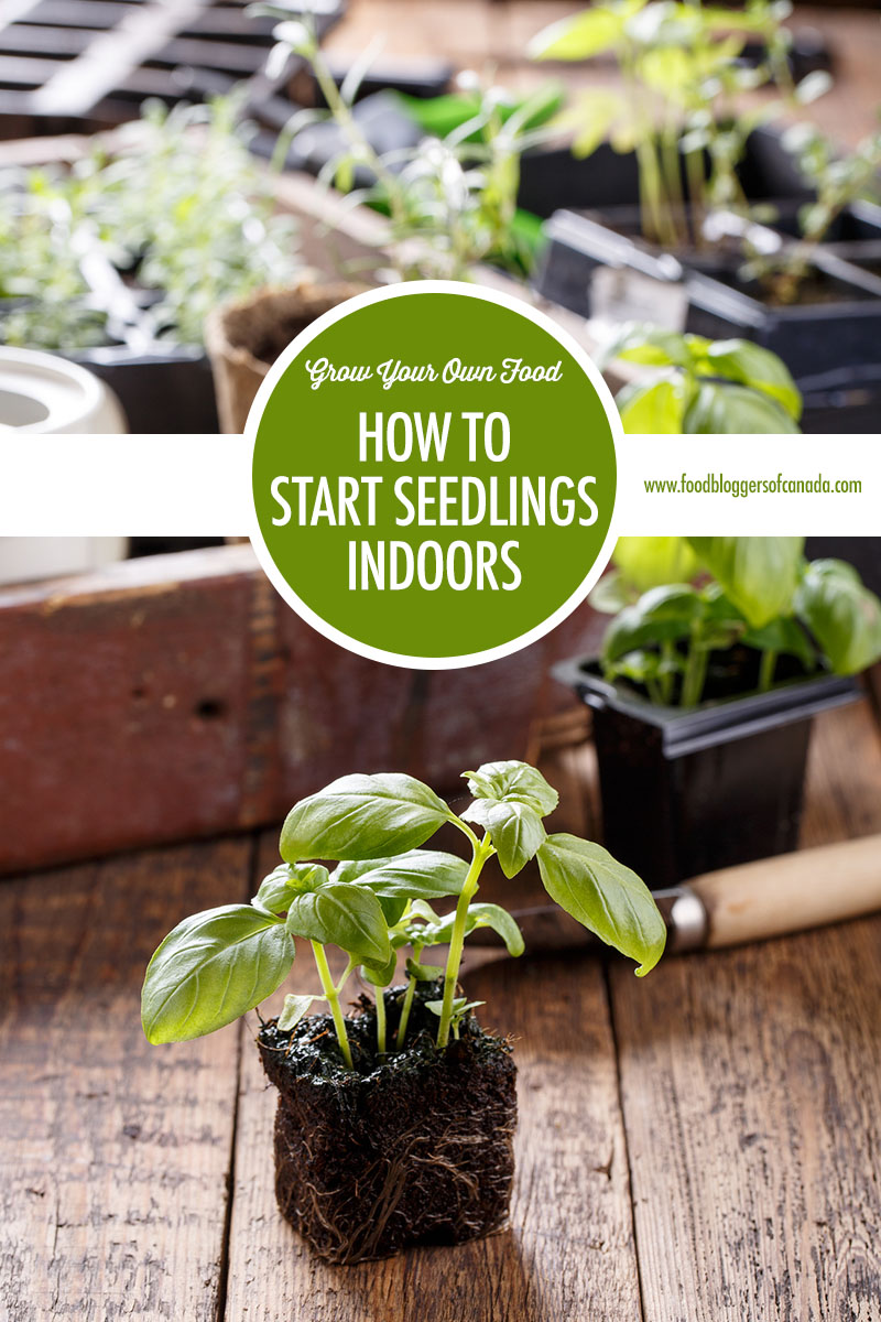 How to Start Seedlings Indoors