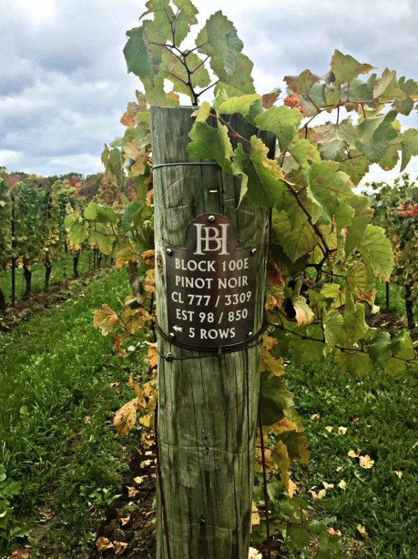 Canadian Wine: Hidden Bench Winery   Food Bloggers of Canada