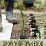Grow Your Own Food: Planting Your Garden | Food Bloggers of Canada