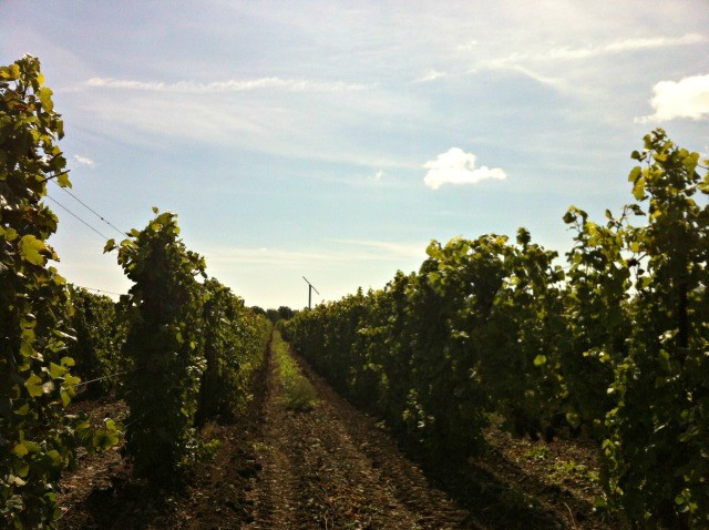 Canadian Wine: The Grange Prince Edward County   Food Bloggers of Canada