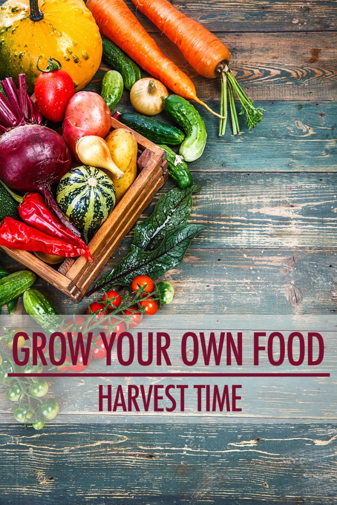 Grow Your Own Food: The Harvest | Food Bloggers of Canada
