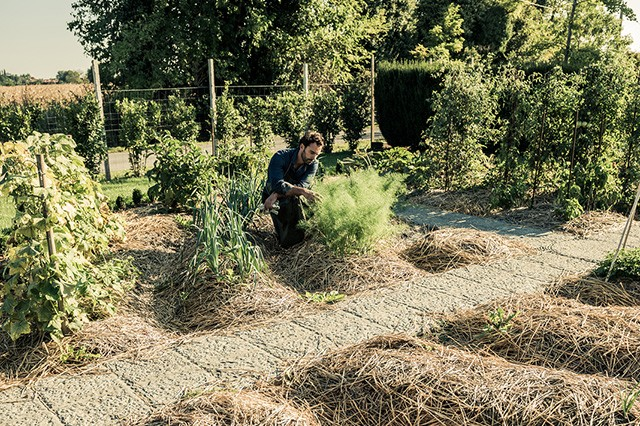 Grow Your Own Food: Mulching, Weeding and Saving Seeds   Food Bloggers of Canada