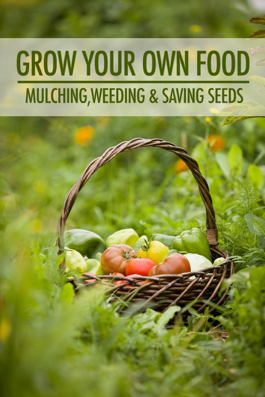 Grow Your Own Food: Mulching, Weeding and Saving Seeds | Food Bloggers of Canada