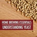 Home Brewing Essentials: Understanding Yeast | Food Bloggers of Canada