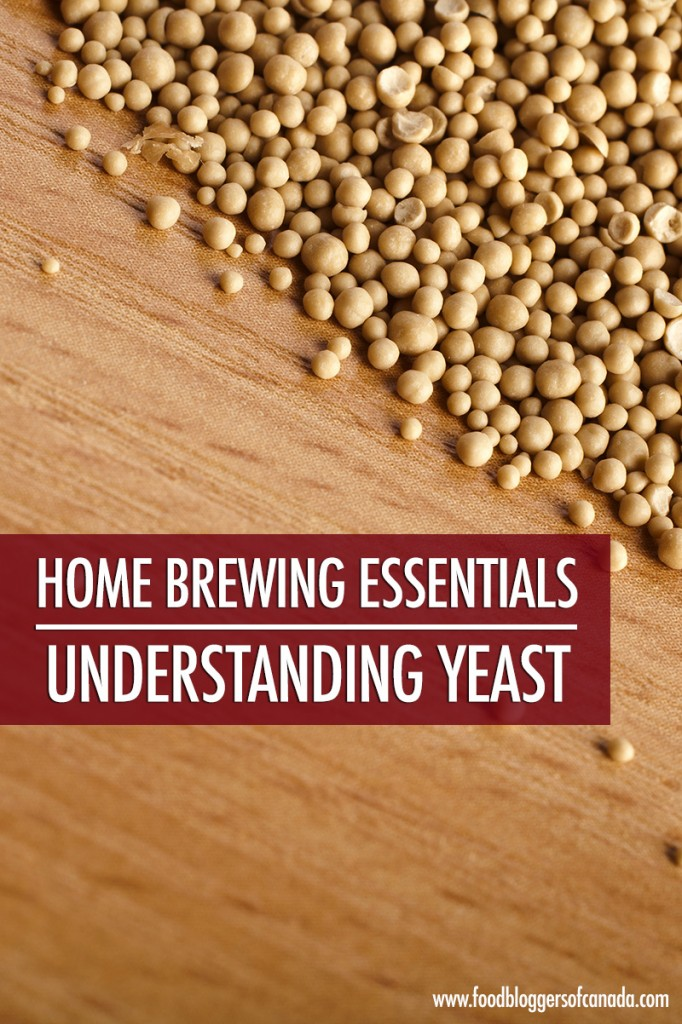 Home Brewing Essentials: Understanding Yeast | Food Bloggers of Canada