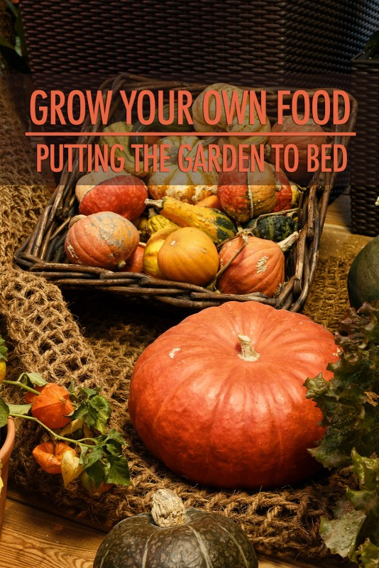 Grow Your Own Food: Putting the Garden to Bed | Food Bloggers of Canada