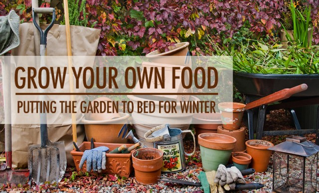 Grow Your Own Food: Putting the Garden to Bed for Winter