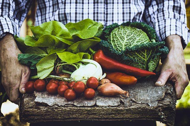 Grow Your Own Food: Reflecting on the Growing Season   Food Bloggers of Canada
