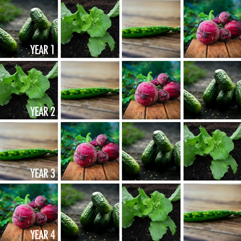 A Guide To Crop Rotation For Your Garden | Food Bloggers of Canada