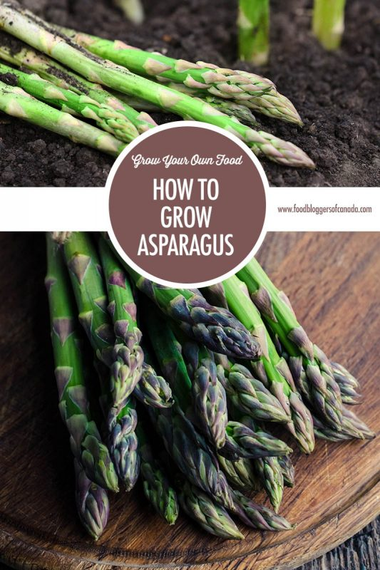 How To Grow Asparagus   Food Bloggers of Canada