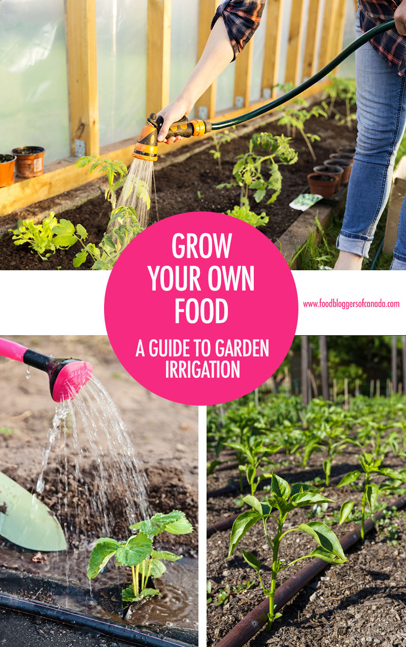 A guide to garden irrigation | Food Bloggers of Canada