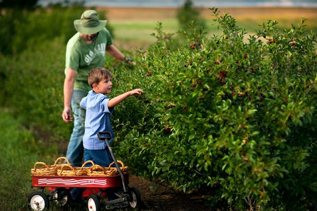 Canadian Tastemakers: Over The Hill Orchard and Winery