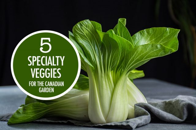 5 Specialty Veggies For the Canadian Garden | Food Bloggers of Canada