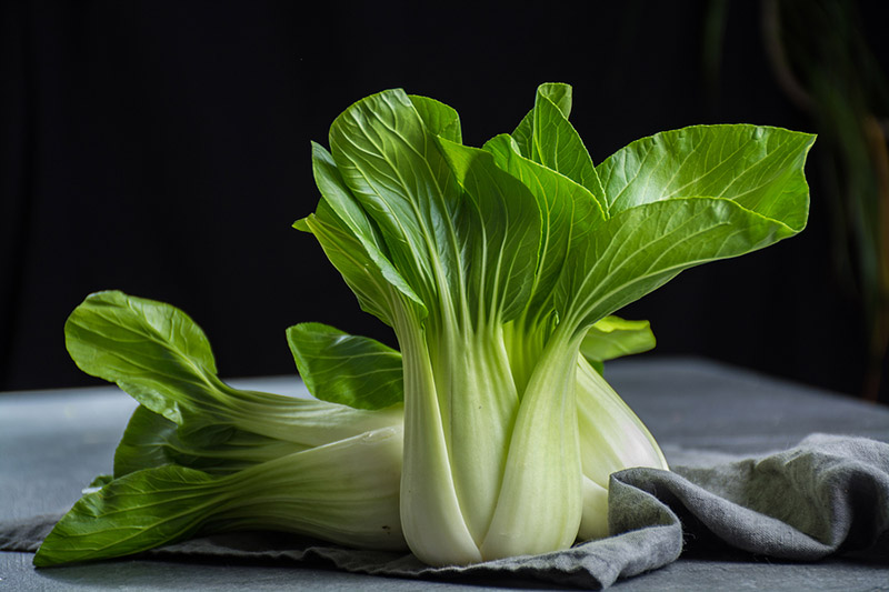 How to Grow Bok Choy | Food Bloggers of Canada