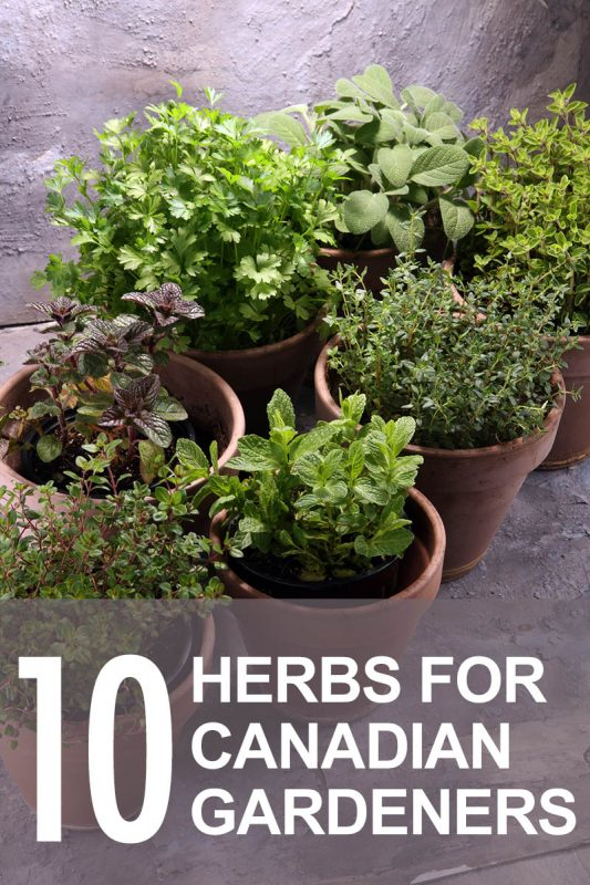 Grow Your Own Food: Our 10 Best Herbs For Canadian Gardens ...