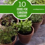 10 Herbs For the Canadian Garden | Food Bloggers of Canada