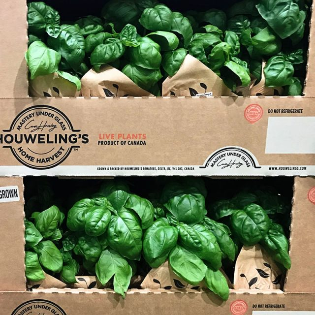 Houwelings Greenhouse Basil