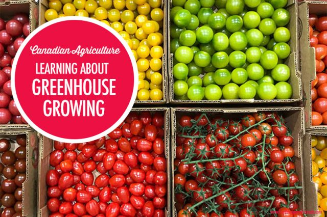 Learning About Greenhouse Growing | Food Bloggers of Canada