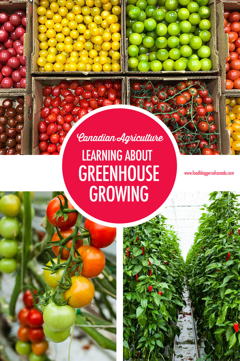 Learning About Canadian Greenhouse Growing | Food Bloggers of Canada