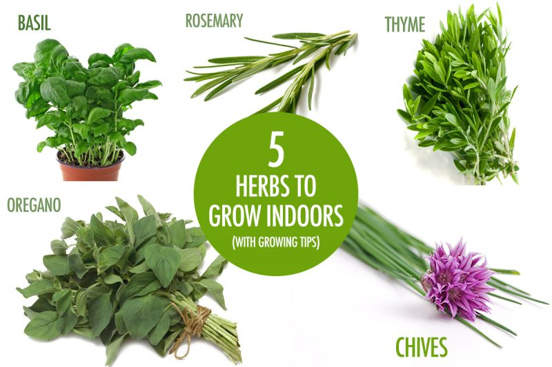 5 Herbs You Can Grow Indoors This Winter