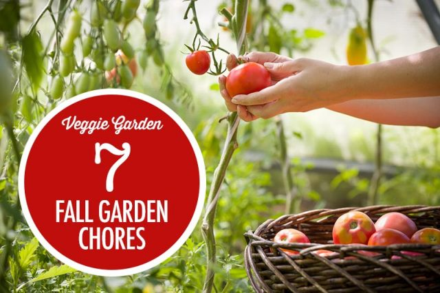 7 Fall Garden Chores For Harvest | Food Bloggers of Canada