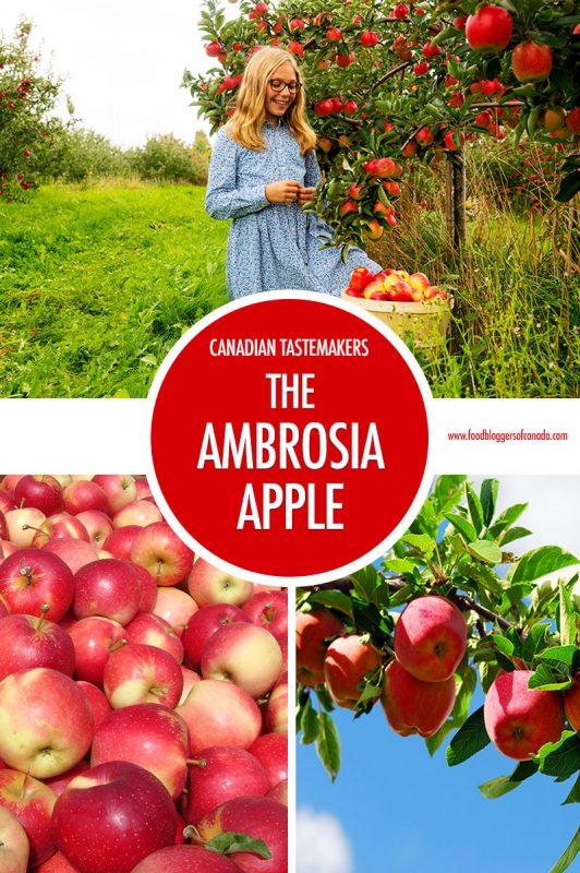 Canadian Tastemaker: The Ambrosia Apple